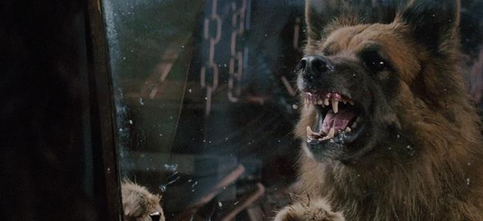Cães Assassinos (2006)