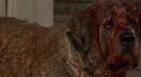 Remake do filme de 1983 baseado no livro de Stephen King será regravado pela Sunn Classic Pictures