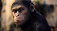 Contando com ótimas cenas de ação e momentos emocionantes, Planeta dos Macacos: A Origem mostra o quanto o tema é sempre bem-vindo!