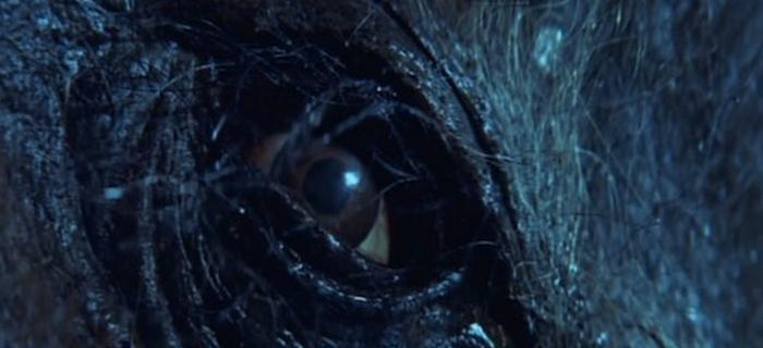 Razorback (1984) (1)