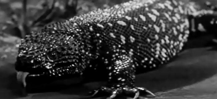 O Gigante Monstro Gila (1959) (2)