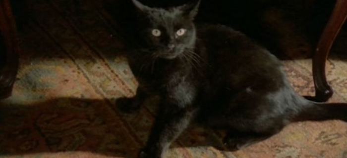 Gato Negro (1981)