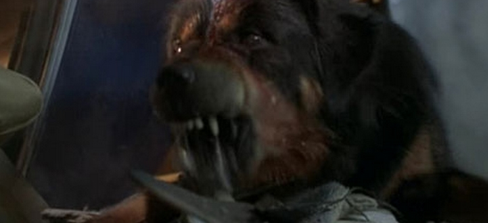 Max (1993)