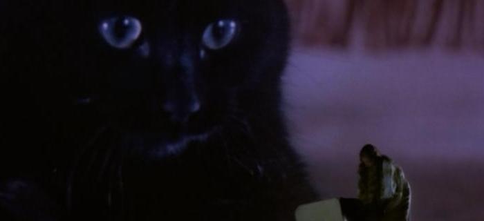 A Maldição dos Gatos (1977) (3)