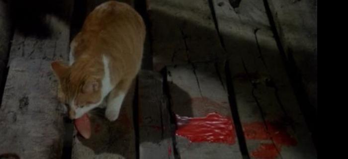 A Maldição dos Gatos (1977)