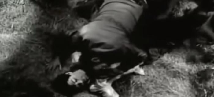 Trilogia de Terror (1968) (3)