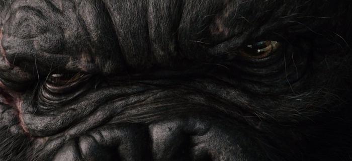 King Kong (2005) (4)