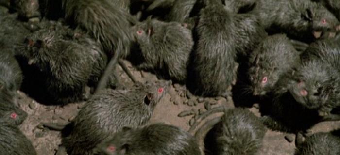 Ratos (1983) (2)