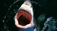 Jovem surfista é isolada da costa por enorme tubarão, em filme cujo roteiro foi escrito por Anthony Jaswinski