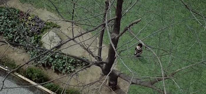 Acácia (2003) (3)