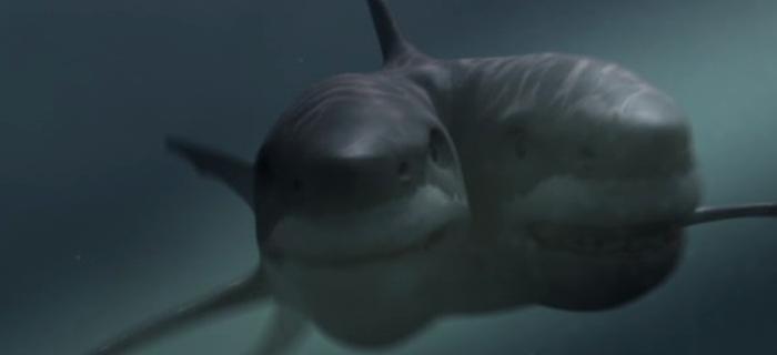 Ataque do Tubarão Mutante (2012) (1)