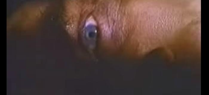 Prisioneiros das Trevas (2001) (1)