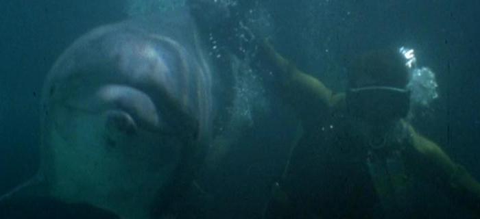 Tubarão 3 (1983) (1)