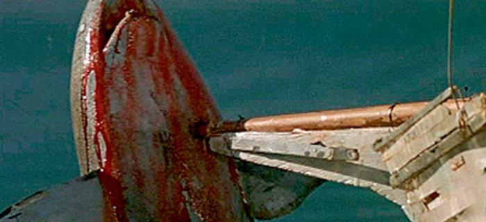 Tubarão 4 - A Vingança (1987) (5)