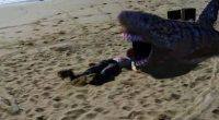 Apostando no humor bobo e nas situações de absoluta insanidade, Tubarões da Areia é um exercício de resistência!
