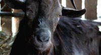 O temperamental animal faz uma breve aparição no novo longa do estúdio A24