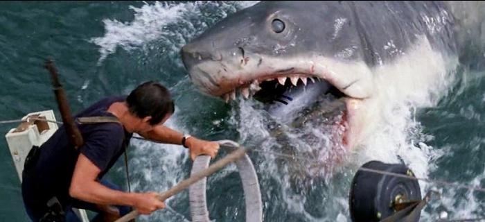 Nem tudo é ficção quando o assunto é tubarão