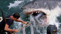 Dez fatos retratados nos filmes de tubarões que quase sempre são reais