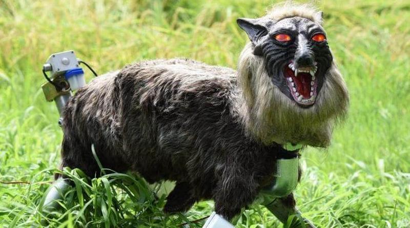 Os fazendeiros japoneses e seus terríveis lobos robóticos